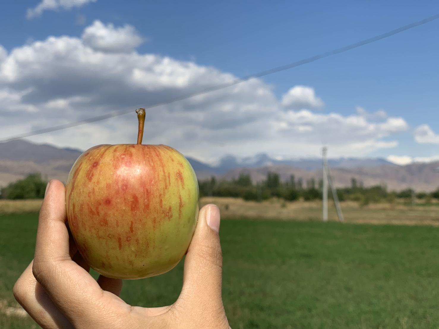 キルギスのりんご
