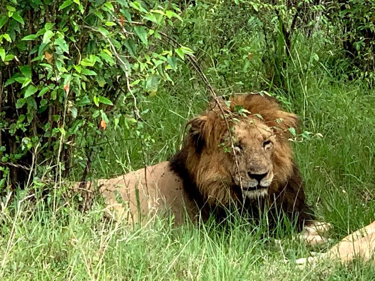 ライオンの目の前でトラブル発生!サファリ2日目前半