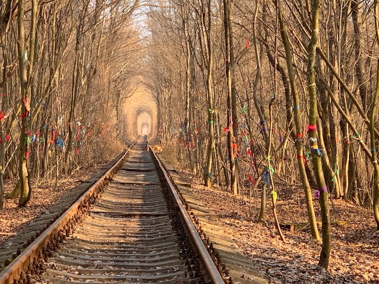 ウクライナ、ガイド犬に導かれて冬の「愛のトンネル」へ!